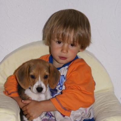 beagle et enfant = inséparable