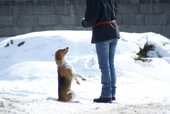 une suricate