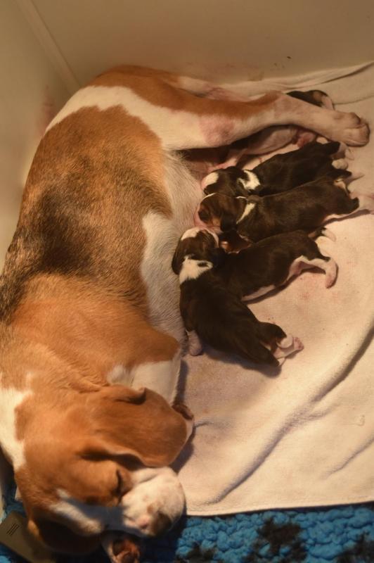 mimi newt naissance