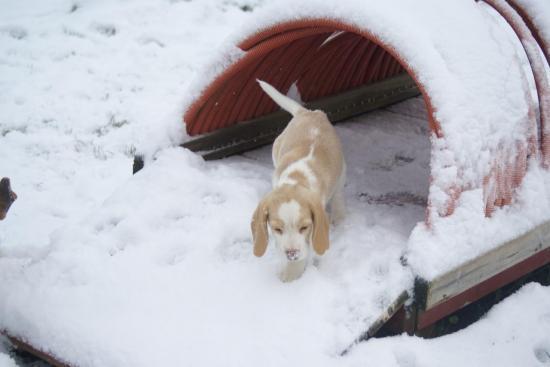 chiot-sous-la-neige-035.jpg