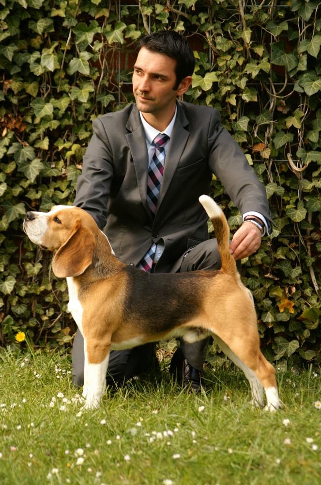 rencontre beagle alsace