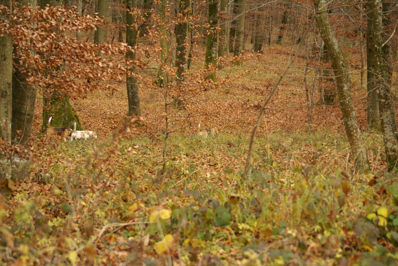 ballade novembre 2011 186
