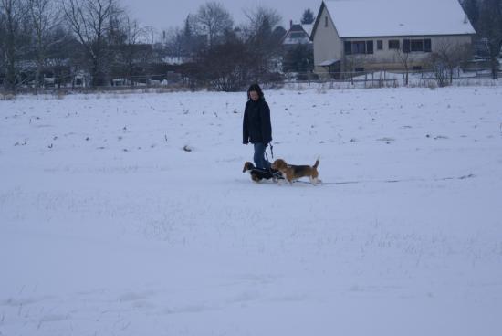 marche au pied avec deux chiens